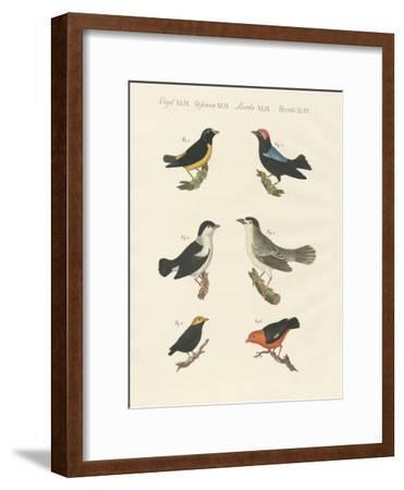 Different Kinds of Manakins--Framed Giclee Print