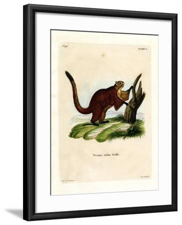 Brilliant Flying Squirrel--Framed Giclee Print