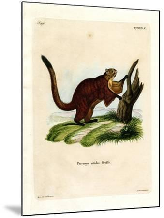 Brilliant Flying Squirrel--Mounted Giclee Print