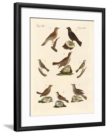 Different Kinds of Larks--Framed Giclee Print