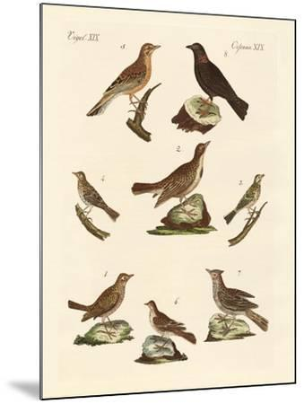 Different Kinds of Larks--Mounted Giclee Print
