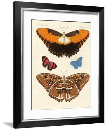 Beautiful Foreign Butterflies--Framed Giclee Print