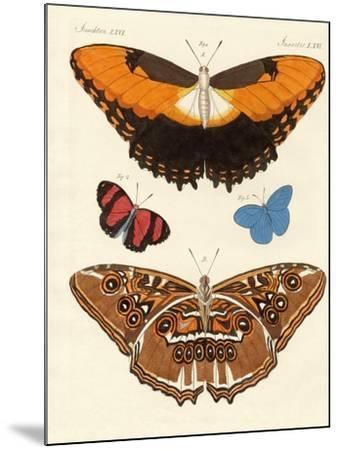 Beautiful Foreign Butterflies--Mounted Giclee Print