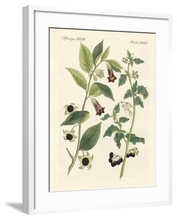 Indigenous Poisonous Plants--Framed Giclee Print