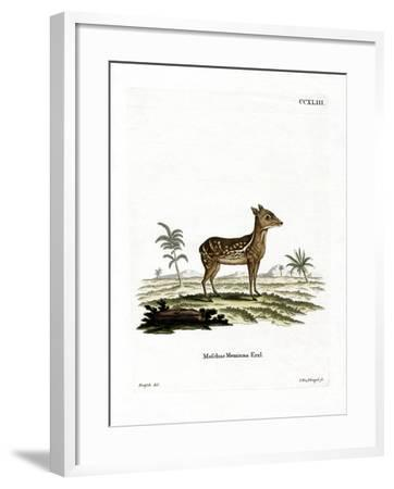 Indian Spotted Chevrotain--Framed Giclee Print