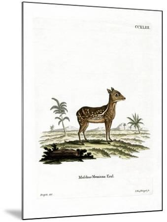 Indian Spotted Chevrotain--Mounted Giclee Print