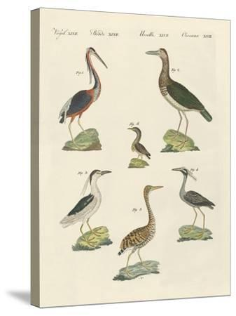 Different Kinds of Herons--Stretched Canvas Print