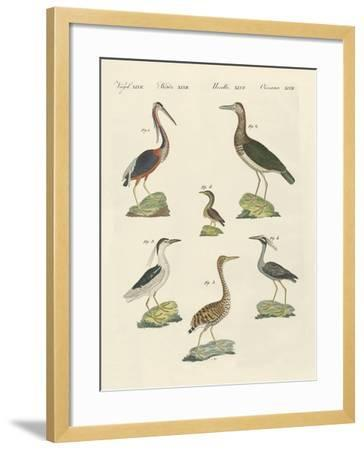 Different Kinds of Herons--Framed Giclee Print