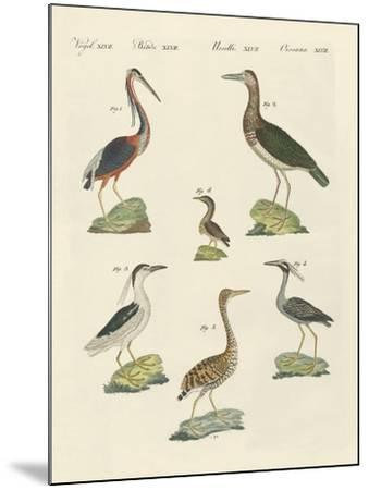 Different Kinds of Herons--Mounted Giclee Print