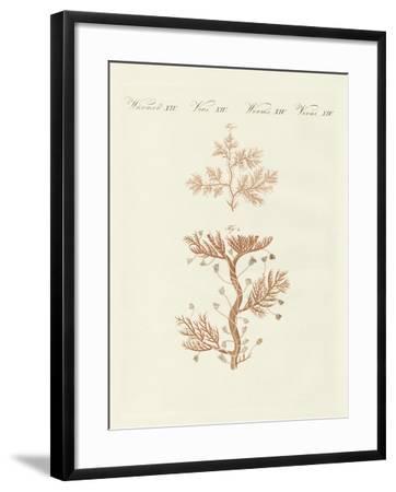 The Winding Sertularia or Base Coralline--Framed Giclee Print