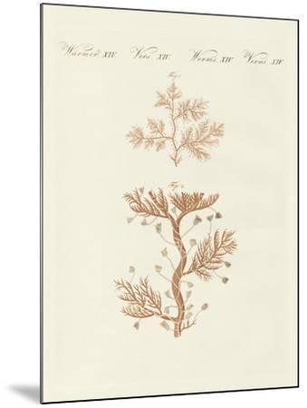 The Winding Sertularia or Base Coralline--Mounted Giclee Print