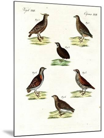 Different Kinds of Quails--Mounted Giclee Print