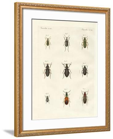 Beautiful German Beetles--Framed Giclee Print