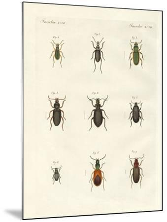 Beautiful German Beetles--Mounted Giclee Print
