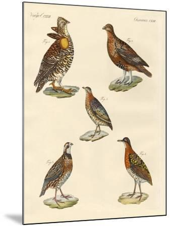 Beautiful Hen-Like Birds--Mounted Giclee Print