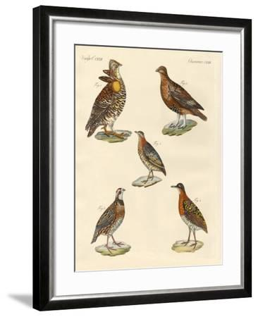 Beautiful Hen-Like Birds--Framed Giclee Print