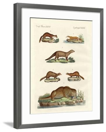 Kinds of Otters and Marten--Framed Giclee Print