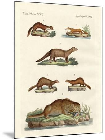 Kinds of Otters and Marten--Mounted Giclee Print