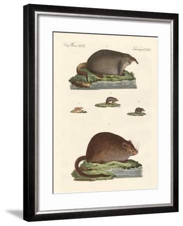 Shrew Mice and Musk Mices--Framed Giclee Print