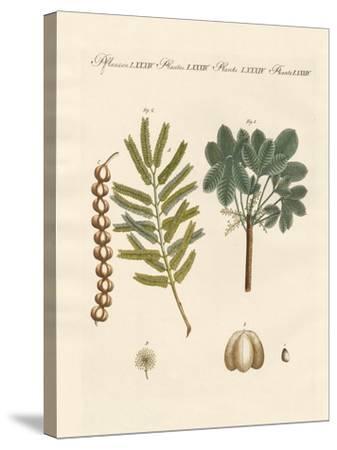 Strange Commercial Plants--Stretched Canvas Print