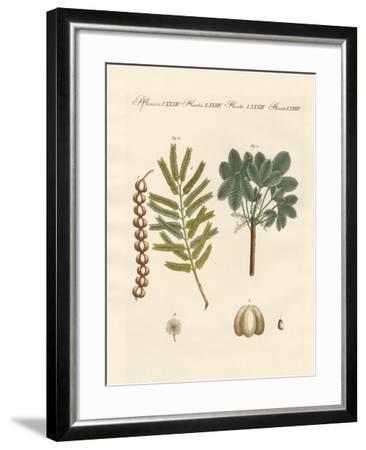 Strange Commercial Plants--Framed Giclee Print