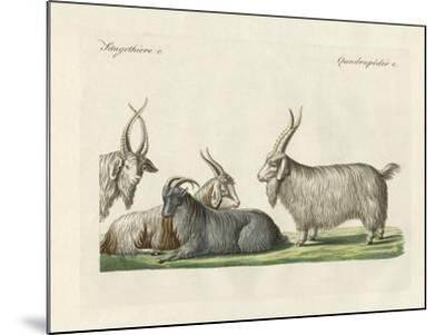 The Kashmir Goats Introduced in France--Mounted Giclee Print