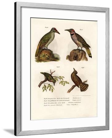 Grey-Headed Woodpecker, 1864--Framed Giclee Print