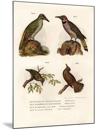 Grey-Headed Woodpecker, 1864--Mounted Giclee Print