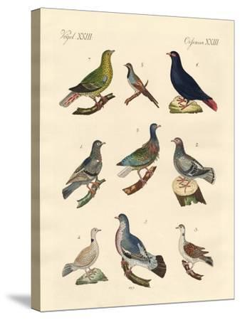 Different Kinds of Pigeons--Stretched Canvas Print
