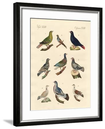 Different Kinds of Pigeons--Framed Giclee Print