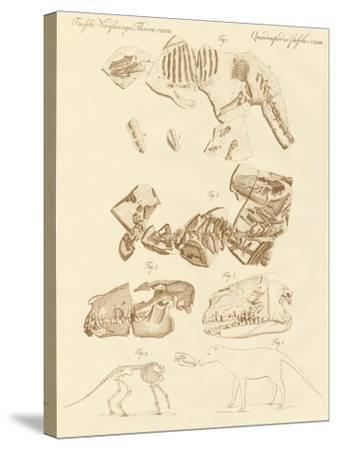 Strange Fossils of Four-Footed Animals--Stretched Canvas Print