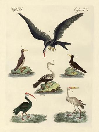 Strange Marsh-Birds and Waterbirds--Framed Giclee Print