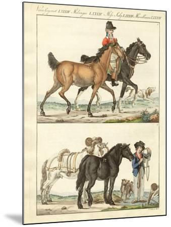 The Horse with its Different Kinds--Mounted Giclee Print
