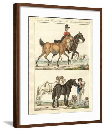 The Horse with its Different Kinds--Framed Giclee Print