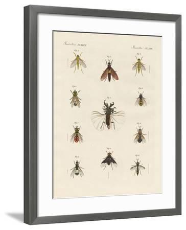 Strange Two-Winged Insects--Framed Giclee Print
