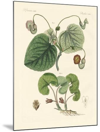 Kinds of Aristolochia Plants--Mounted Giclee Print