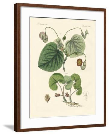 Kinds of Aristolochia Plants--Framed Giclee Print
