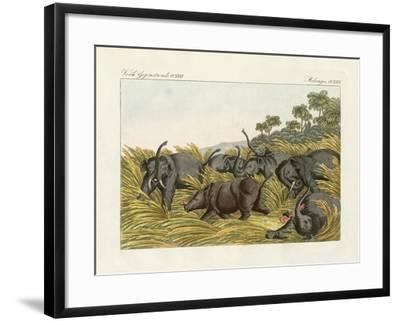 The Fight of the Rhinoceros with the Elefants--Framed Giclee Print