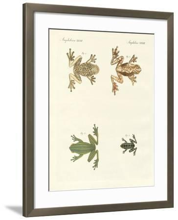 Different Kinds of Foreign Tree Frogs--Framed Giclee Print