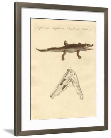The Crocodile from St. Domingo--Framed Giclee Print