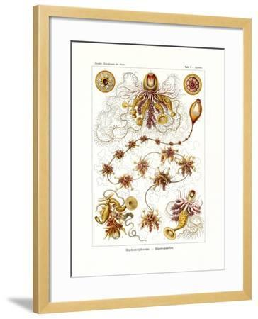 Siphonophorae, 1899-1904--Framed Giclee Print