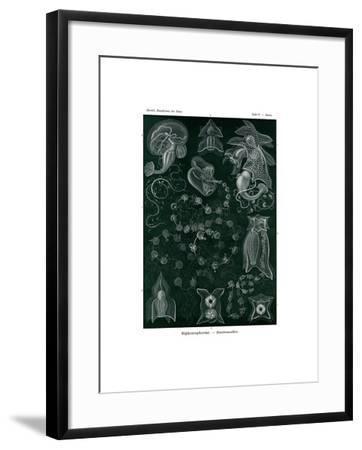Siphonophorae, 1899-1904--Framed Giclee Print