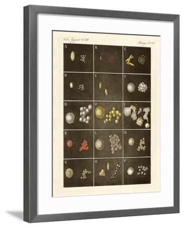 The Pollen or Pollen of Plants--Framed Giclee Print