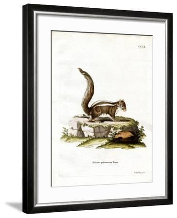 Indian Palm Squirrel--Framed Giclee Print