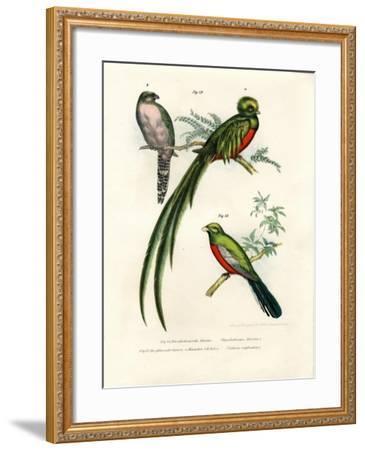 Narina Trogon, 1864--Framed Giclee Print