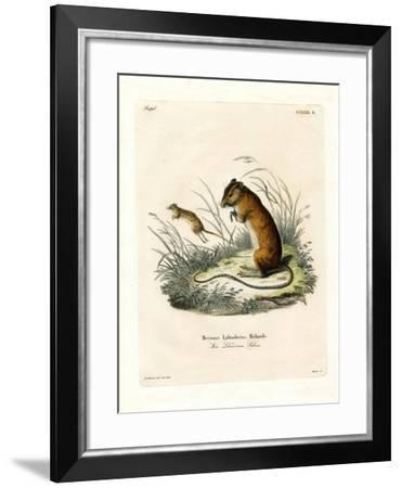 Labrador Jumping Mouse--Framed Giclee Print