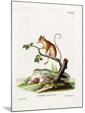 Common Mouse Opossum--Mounted Giclee Print