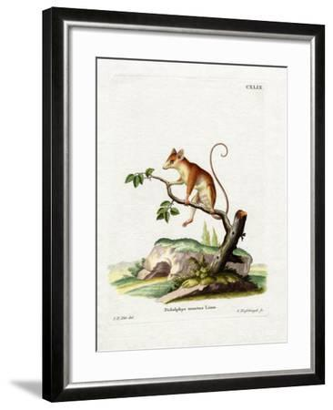Common Mouse Opossum--Framed Giclee Print