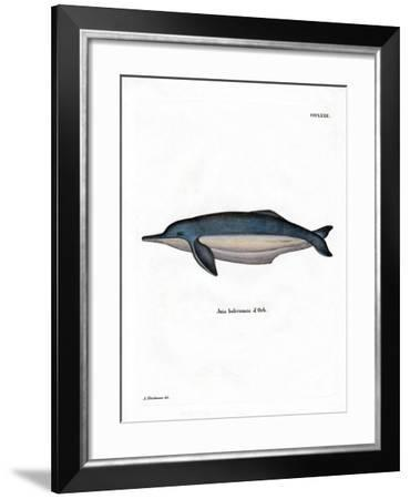 Amazon River Dolphin--Framed Giclee Print