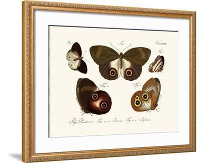 Butterflies, 1783-1806--Framed Giclee Print